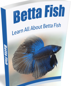 Betta Fish eBook